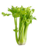 Celery on a white background — Stock Photo