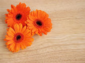 Gerberas on wood — Stock Photo