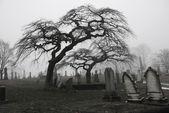Spooky graveyard scene — Stock Photo