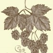 Vector de stock : Hand drawn hop branch