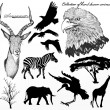 Collection of high detailed hand drawn animals and silhouettes o - Stock Vector
