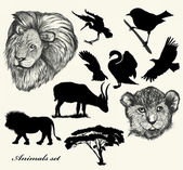 Collection of hand drawn animals and silhouettes — Stock Vector
