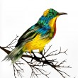 Colorful  vector realistic tropical bird sit at the branch on wh — Stok Vektör