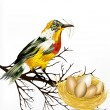 Colorful  vector realistic tropical bird with nest on white back — Stok Vektör