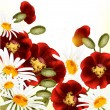 Cute floral background with red poppyes and chamomiles — Stockvektor