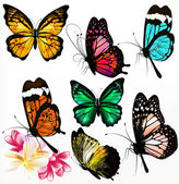Collection of colorful realistic vector butterflies — Stock Vector