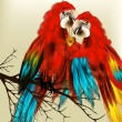 Cute couple of colorful vector realistic ara parrots sit on bran - Stock Vector