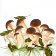 Cute outdoor  vector scene with mushrooms — Image vectorielle