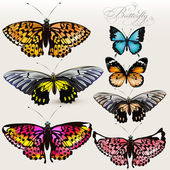 Set of vector colorful realistic butterflies for design — Stock Vector