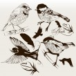 Stok Vektör: Collection of vector hand drawn birds for design
