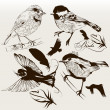 图库矢量图片: Collection of vector hand drawn birds for design