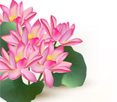 Background with pink vector lotus flowers on a white — ストックベクタ