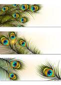 Cartes de visite vecteur sertie de fougères de paon — Vecteur