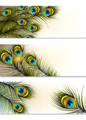 Visitekaartjes vector set met peacock varens — Stockvector