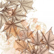 Autumn  floral background with maple leafs — Image vectorielle