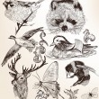 图库矢量图片: Vector set of detailed hand drawn animals in vintage style