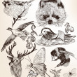 Vector set of detailed hand drawn animals in vintage style — Stock Vector