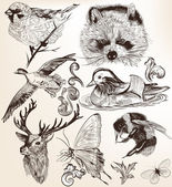 Vector set of detailed hand drawn animals in vintage style — Stok Vektör
