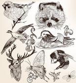 Vektorový soubor podrobných ručně kreslenou zvířat v retro stylu — Stock vektor