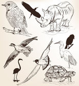 Collection of hand drawn vector detailed animals for design — Stock vektor