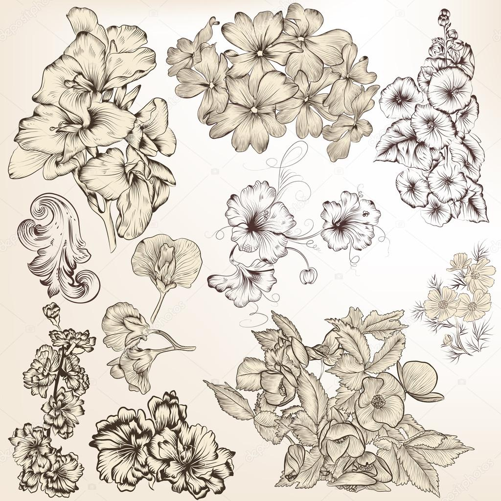 Raccolta di vector dettagliate fiori disegnati a mano per for Fiori disegnati