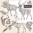 Stok Vektör: Collection of vector hand drawn animals in vintage style