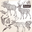 Collection of vector hand drawn animals in vintage style — Vector de stock #31350589