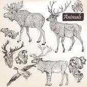 Collection de vecteur à la main des animaux dessinés dans un style vintage — Vecteur
