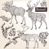 Collection of vector hand drawn animals in vintage style — Vettoriale Stock