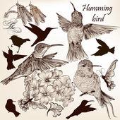 Vector set of hummingbirds in vintage style for design — Vector de stock