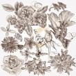 Collection of vector hand drawn detailed flowers for design — Stock Vector #33581339