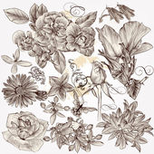 Collection of vector hand drawn detailed flowers for design — ストックベクタ