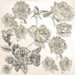 Collection of vector detailed roses flowers — Imagens vectoriais em stock