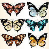 Collection of vector colorful butterflies for design — Stock Vector