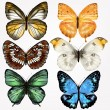 colorful collection of vector realistic butterflies for design — Stock Vector #36900053