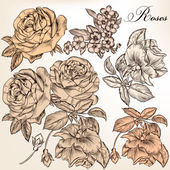Collection of vector hand drawn detailed roses for design — Stock Vector