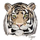 一方の手で美しいベクトル背景描画水彩タイガー — ストックベクタ