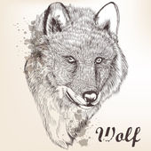 Hand drawn portrait of wolf — Stock Vector