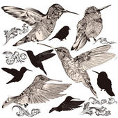 Collection of vector high detailed humming birds — Stock Vector