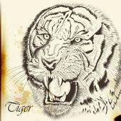 Hand drawn vector  portrait of tiger in vintage style — Stockvektor