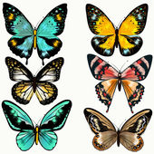 Collection of colorful vector butterflies for design — Stock Vector