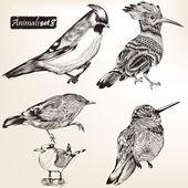 Collection of vector detailed birds — Stock Vector