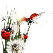 Background with vector green grass, dandelions and ladybirds — Stock Vector