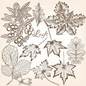 Collection of vector high detailed leafs for floral design — Stock Vector