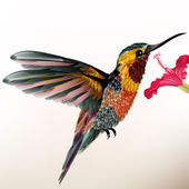 Beautiful colorful hummingbird with flower — ストックベクタ
