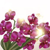 Beautiful background with orchid  flowers — Stok Vektör