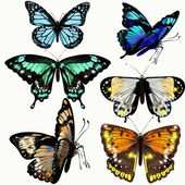 Colorful collection of vector realistic butterflies — Cтоковый вектор
