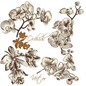 Collection of high detailed vector orchid flowers — Stok Vektör