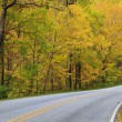 A Road in Autumn - Stock Photo