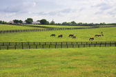 Kentucky Horse Farm — Stock Photo
